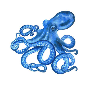 Watercolor octopus in blue color. Hand drawn illustration on the white background.
