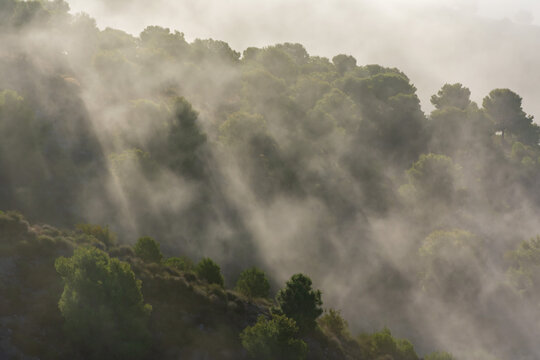Low clouds on the mountain creating a beautiful landscape with the reflections of the sun and the fog between the trees.