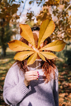 A beautiful brunette woman hiding her face behind a leaf. She is playing with leaves in the park in a autumnal day. Lifestyle in autumnal outdoors
