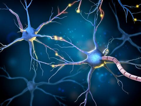 Multipolar neurons network