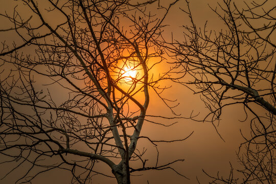 Bare aspen tree in October with an orange sky and sun behind, due to wildfires