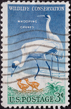 USA - Circa 1957 : a postage stamp printed in the US showing two Whooping Cranes Text: Wildlife Conservation