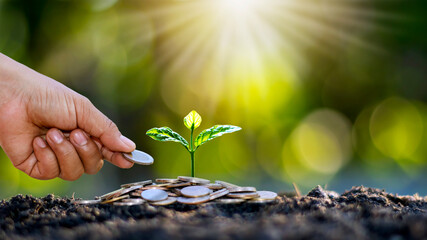 Planting trees on pile of money in the ground and blurred green nature background, financial and...