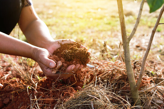 Gardeners hands holding soil to plant trees