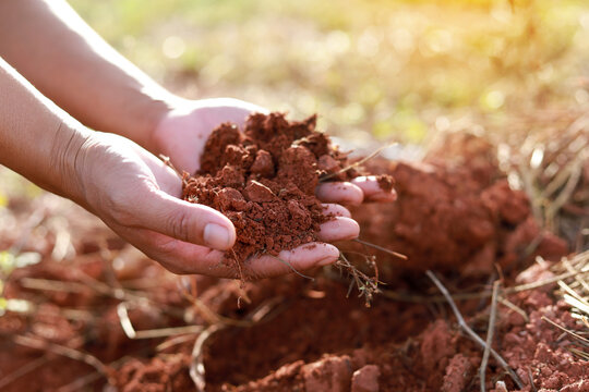 Hands of the gardeners are grabbing the soil to plant the trees.