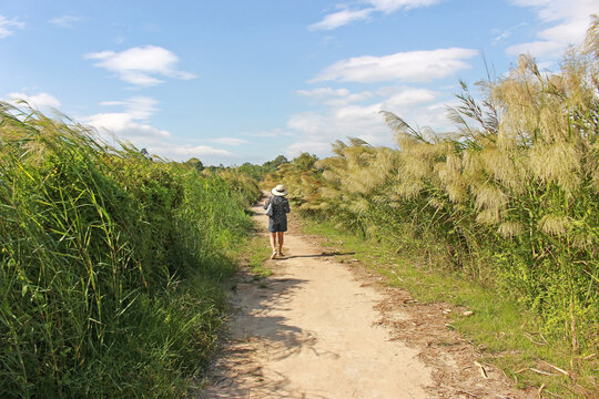 The back of a woman in a hat walking on a footpath with long green grass to one side and pampas to the other against a blue sky background