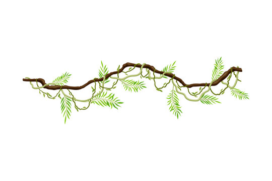 Liana as Long-stemmed Woody Vine Climbing and Tangled Around Tree Vector Illustration