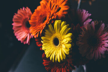 Beautiful bouquet of gerberas of different colors on a black background.