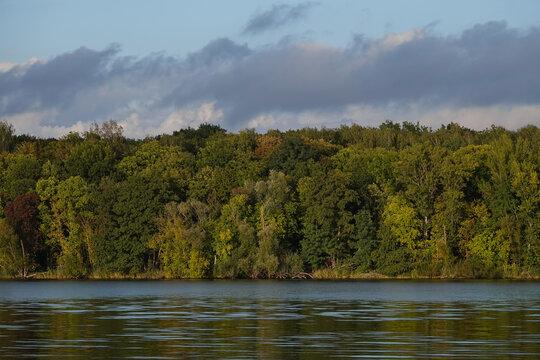 grüner Wald am See