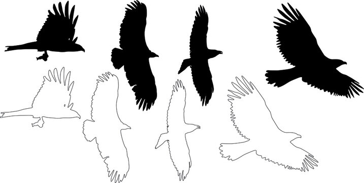 silhouette and outline of raptors and vulture on flight, vector on white background