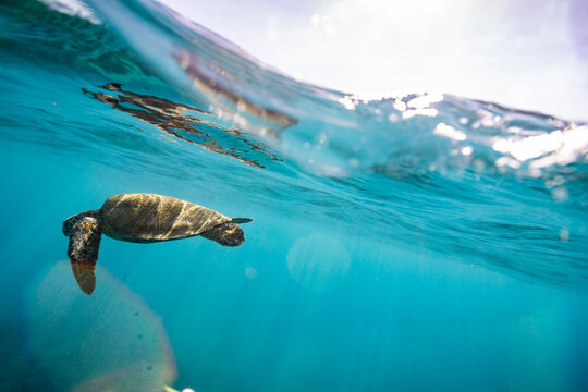 Sea turtle swims beneath the surface of the ocean with sun spots