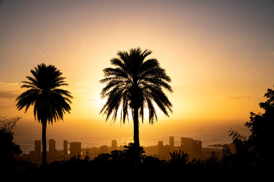 Sunset and palm trees overlooking Honolulu, Hawaii