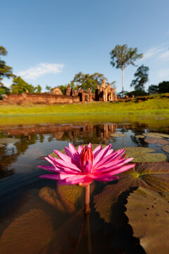 Angkor archaeological Park, Siem Reap, Cambodia. Close up of lotus flower in moat with Banteay Srey temple in background.