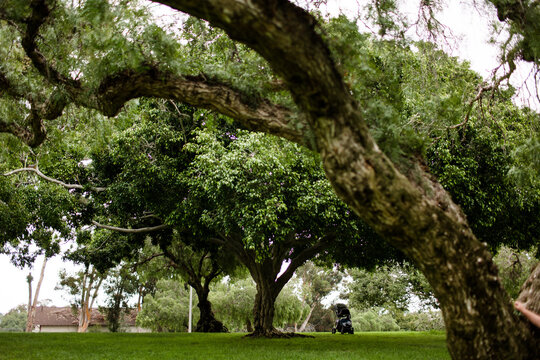 Shot of Trees in Park on a Cloudy Morning