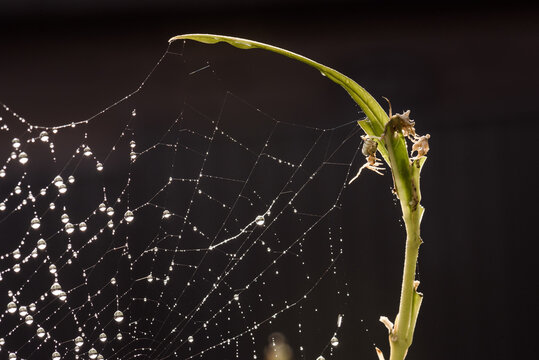 Small spider reaching a leg toward dew covered spiderweb
