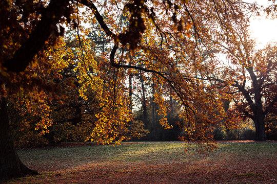 Sonne die durch die Blätter eines Baumes scheint