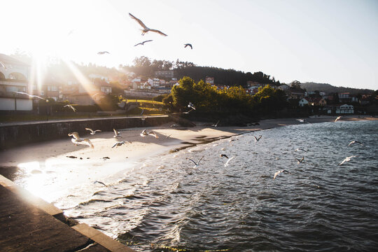 seagulls flying on the beach against village houses and sunset
