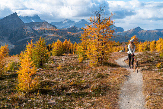Dog Walking Through Healey Pass During Fall in the Rockies
