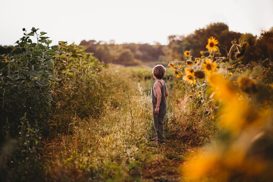 Child in dungarees standing in a sunflower field looking away