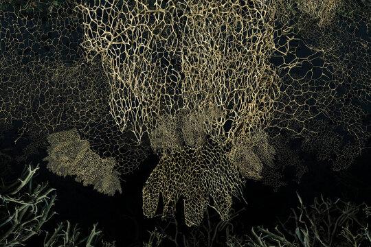 a marine coral texture set