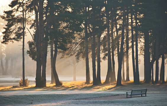 park bench on a frosty morning in Woking / Surrey