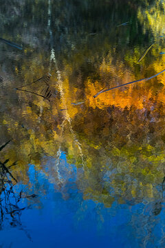 Reflections on a sunny autumn day at Cripplegate Lake in West Sussex