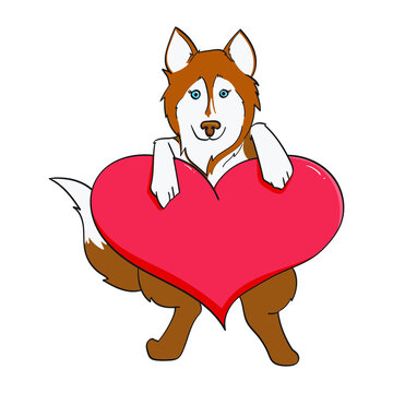 husky holding up a red heart