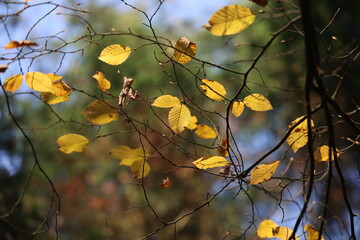 Bright autumn leaves on tree branches in the forest