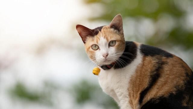 three color cat cat resting in garden