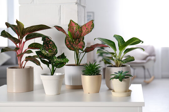 Collection of exotic houseplants with beautiful leaves indoors
