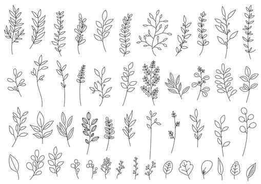 植物線画詰め合わせ