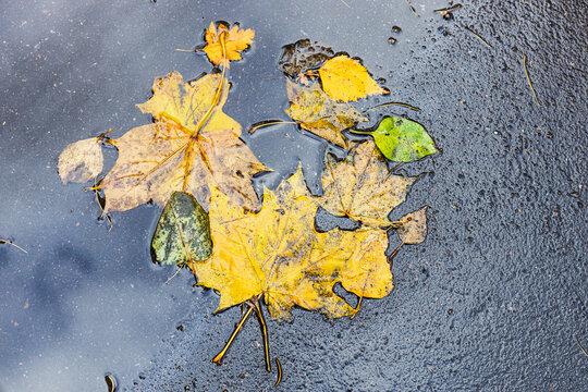 various yellow fallen leaves on wet asphalt pavement of city road after autumn rain