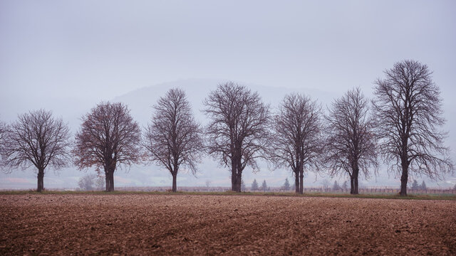 Naked trees in autumn on a field in Burgenland