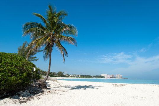 Paradise Island Beach With A Palm Tree