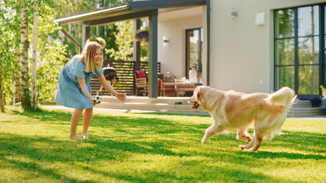 Cute Girl Has fun with Happy Golden Retriever Dog on the Backyard Lawn. She Pets, Play, Tackle it on the Ground And Scratches Stomach. Pedigree Dog Holds Toy Football in Jaws. Idyllic Summer House