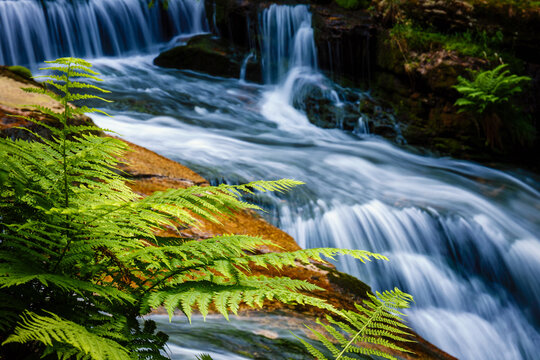 close-up of fern leaves with a beautiful waterfall in the background