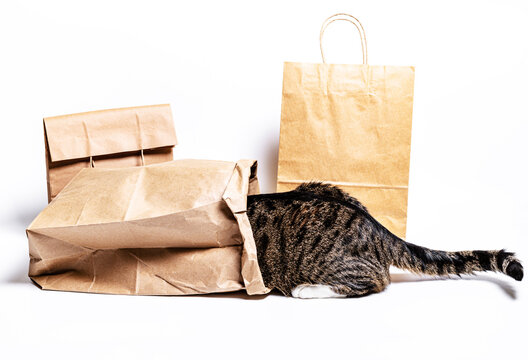 cat climbed into a craft bag on a white background. Shopping concept