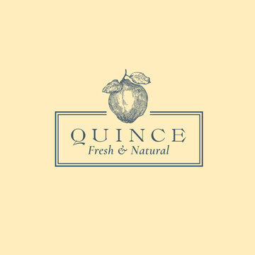 Apple Quince Abstract Vector Sign, Symbol or Logo Template. Hand Drawn Fruit Sillhouette Sketch with Elegant Retro Typography and Frame. Vintage Luxury Emblem. Isolated