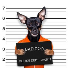 prague ratter dog police mugshot