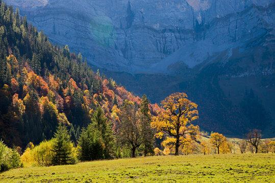 colorful autumnal forest in alpine landscape karwendel mountains