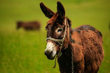 close up of a donkey