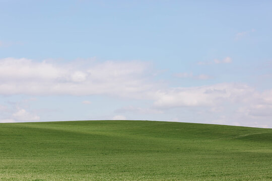 Over-wintered wheat field and blue sky