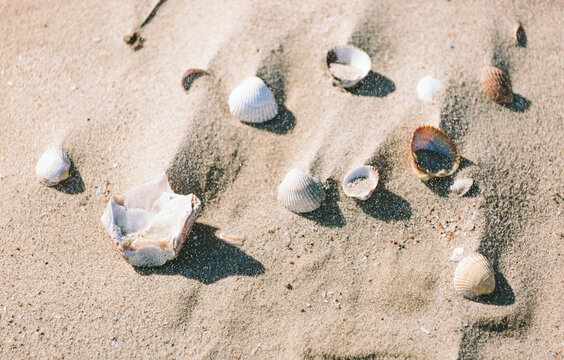 Sand on a beach blowing over sea shells