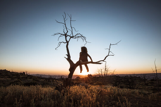 Kid Watching sunset on a tree