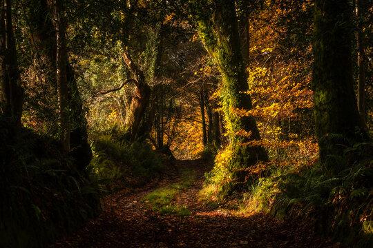 Autumn golden sunlight in the forest
