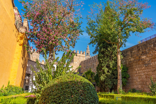 Seville cathedral Giralda tower from Alcazar arch door of Sevilla, Spain