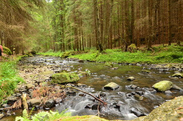 czech switzerland mountains forest river nature sky lake rocks outdoor relax