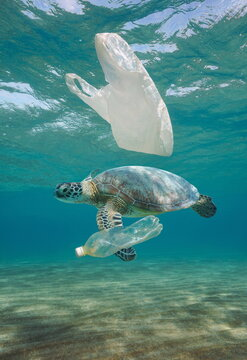 Plastic waste pollution underwater, a sea turtle with plastic bag and bottle in the ocean