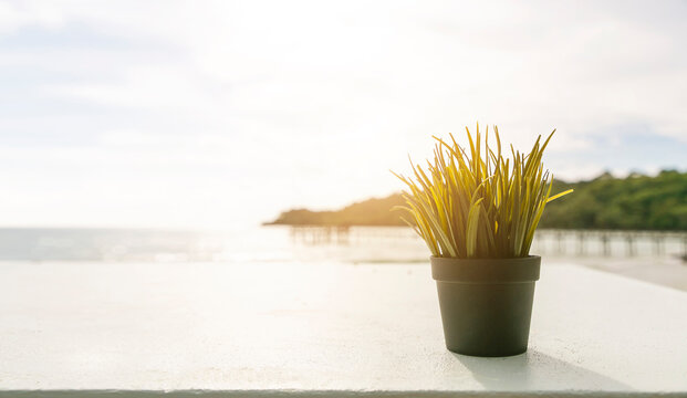 Wooden white table with plant on blurred beach background.