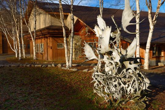 Sculpture of caribou and moose antlers at Chena Hot Springs Resort Chena, Alaska - October 20, 2013